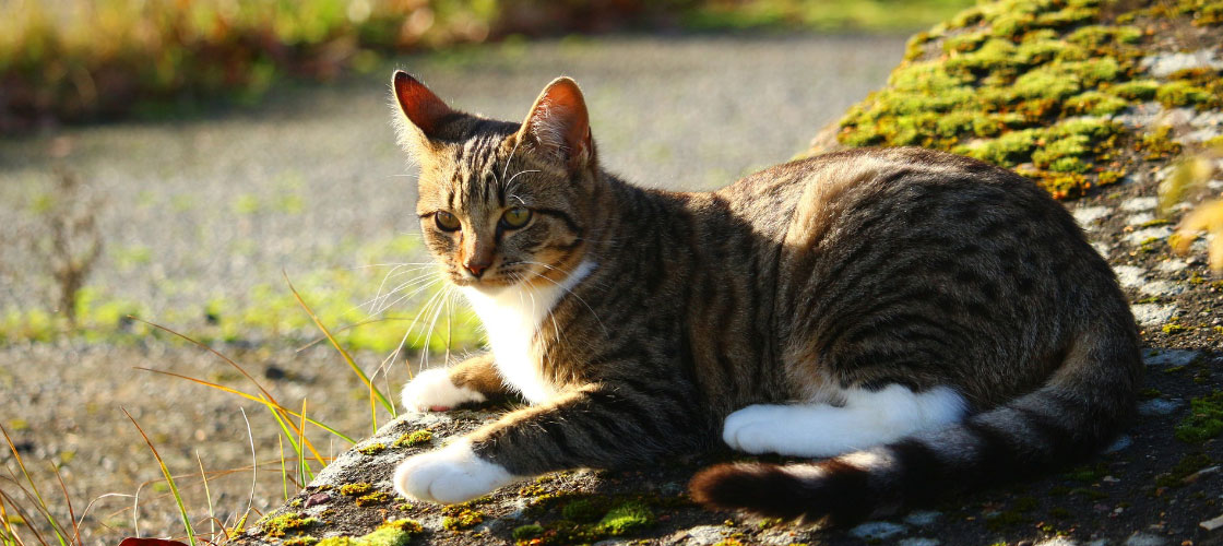 Katze_Herbst_2016