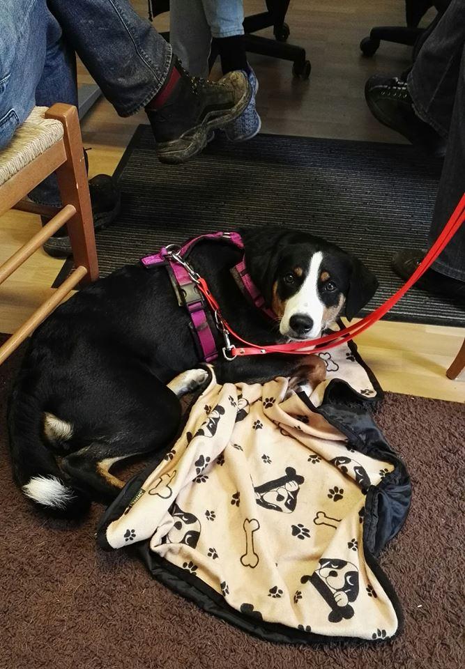 Tierpsychologie für Hunde